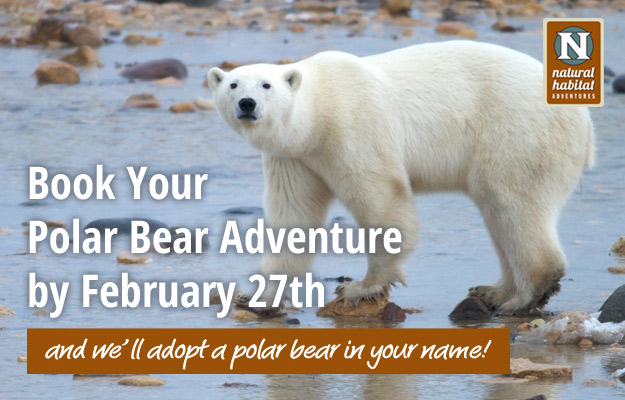 Book your Polar Bear Adventure by Feb. 27 and we'll have WWF adopt a polar bear in your name!