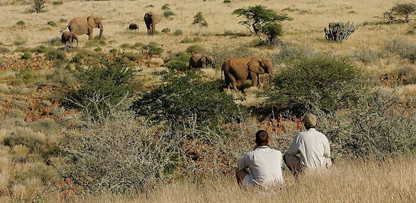 Damaraland Camp is located in the Torra Conservancy and is a good place to spot elephants and black rhinos.