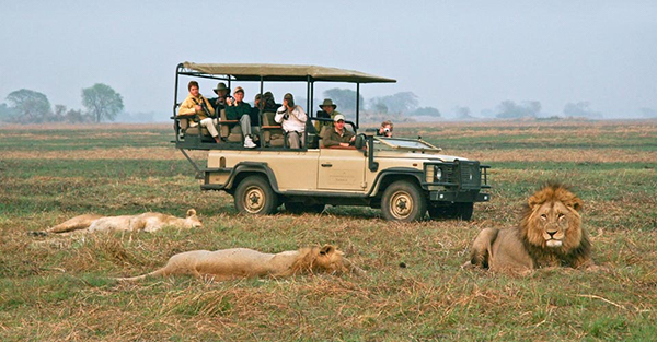 Lions and travelers in Zambia