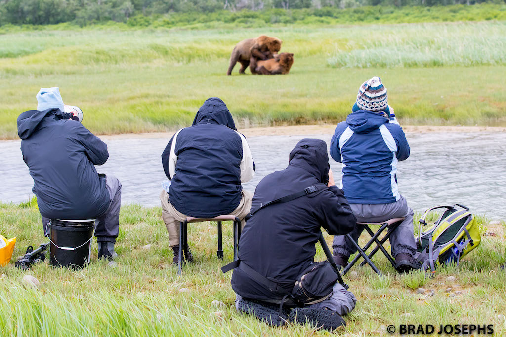 Travelers photographing brown bears.