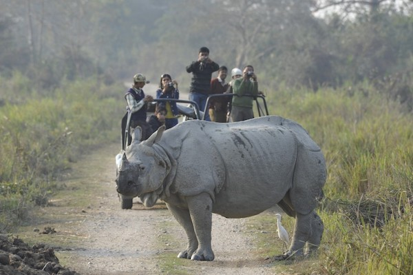 One horned rhino in India.