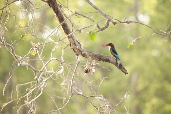 Kingfisher in India.