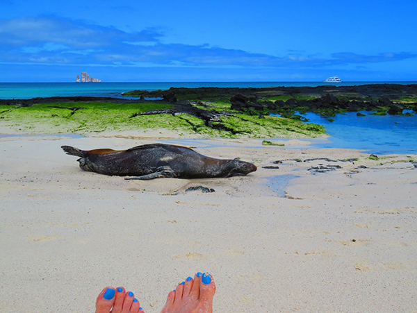 Sea lion laying on the beach in the Galapagos.