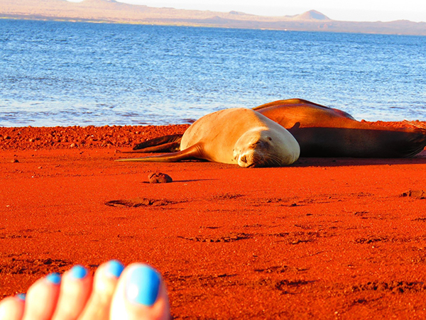 Sea Lion Asleep In The Galapagos