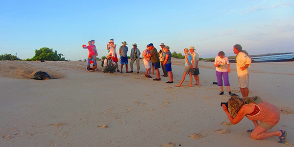Group photographing sea turtle on the beach in the Galapagos.