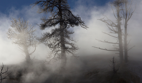 Against a clear, blue, winter sky, steam envelops the trees of Yellowstone. /></center> <em>Against a clear, blue, winter sky, steam envelops the trees of Yellowstone. © Candice Gaukel Andrews<br />