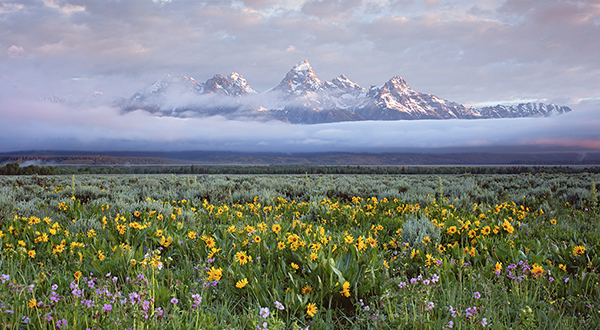 Grand Tetons and wildflowers.