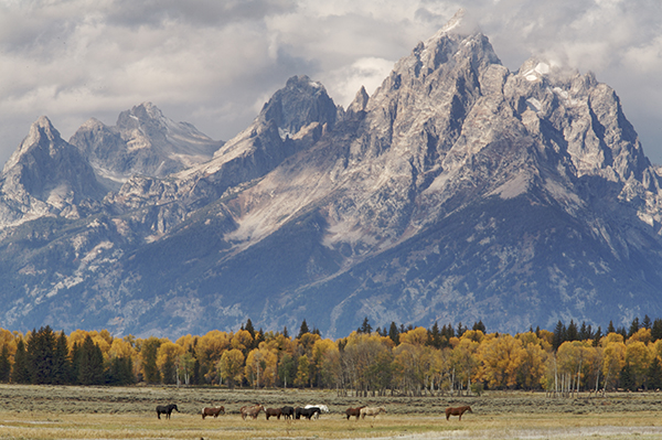 Horses under the Grand Tetons.