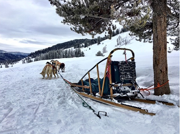 Dogsled in Yellowstone.