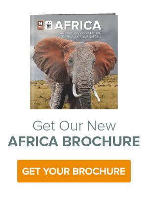 Get an African Safari Brochure