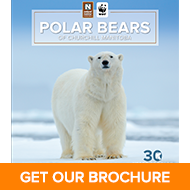 Get Your Churchill Polar Bears Brochure from Nat Hab & WWF