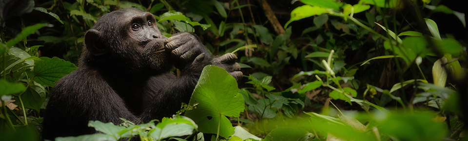 2016 Wildlife Photo Contest - Experts' Choice Grand Prize Winner: 'The Thinker' by Cheryl Ramalho
