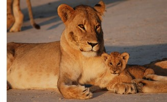 Botswana Family Tour Package