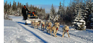 Sled Dog Rides in Canada