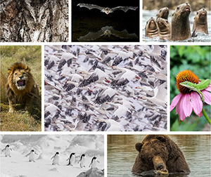 2016 Wildlife Photo Contest Winners
