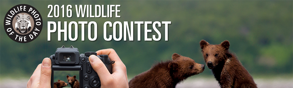 2016 Wildlife Photo Contest