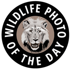 Wildlife Photo of the Day