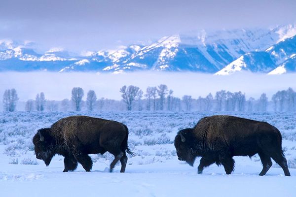 Visit Yellowstone for the winter holidays