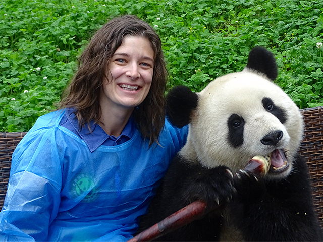 Assisting with panda care at a research base outside of Chengdu, China.