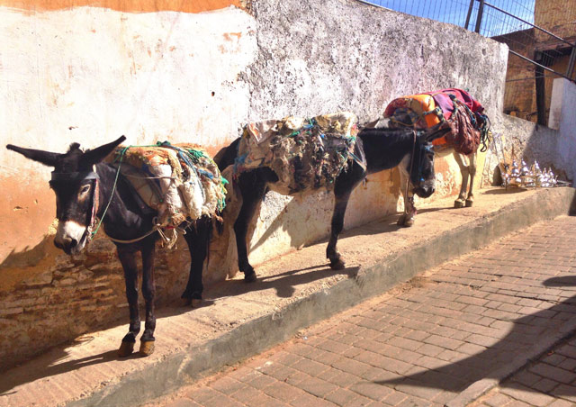"Donkeys in Fez, Morocco. Fez is the ""old city"" of Morocco. The streets are so narrow they still use these animals to get everything they need in and out."