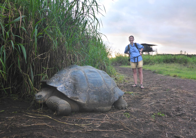At Nat Hab's Tortoise Camp, Santa Cruz, Galapagos Islands