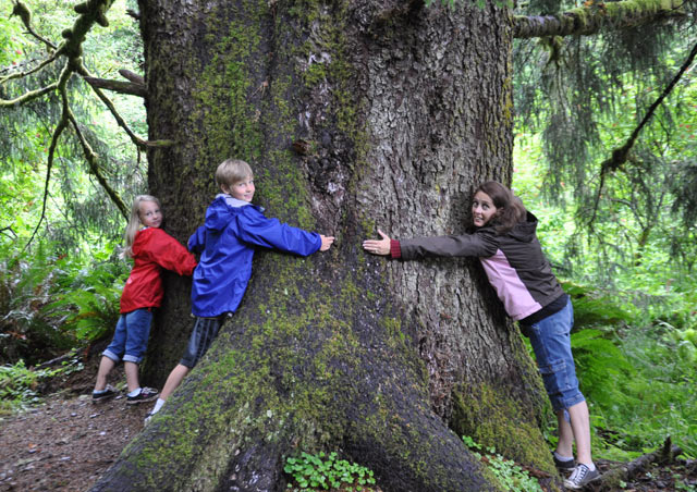 Hugging trees in the great rain forest of Oregon.
