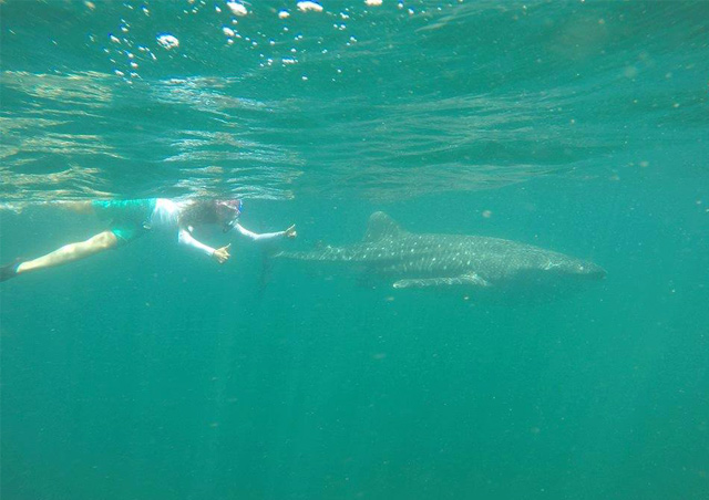Corrin completing whale shark population density research in the Sea of Cortez.