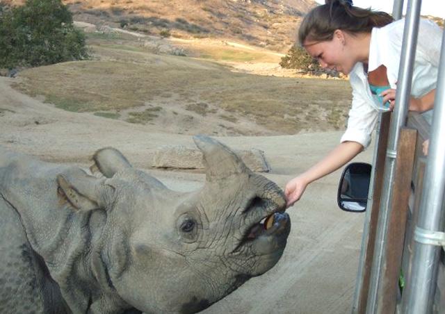 Corrin working with a Northern white rhino at the San Diego Zoo Safari Park.