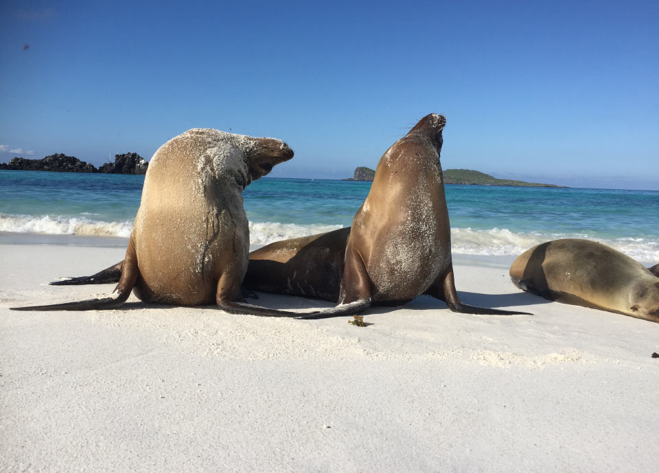 Corrin loved frolicking with sea lions in the Galapagos.