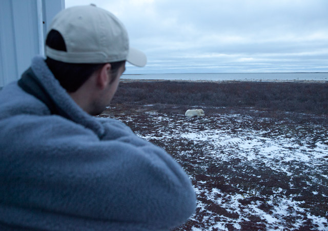 Bear viewing from the Tundra Lodge – there's no better way to get out there and more immersed into the arctic tundra
