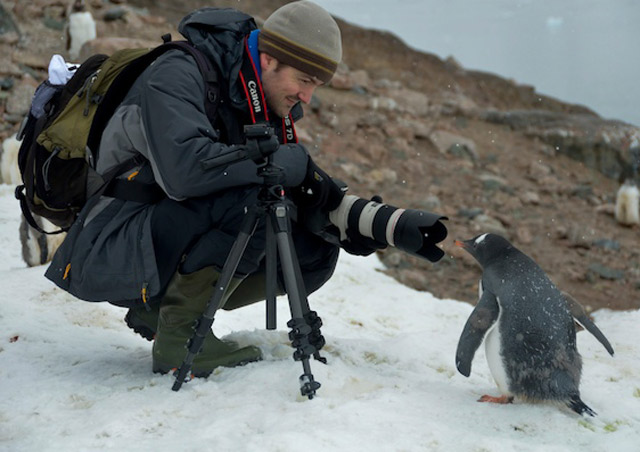 Gentoo penguins are quite curious and happen to love seeing themselves in a big camera lens