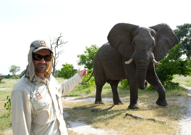 In Botswana, you don't go to the elephants, the elephants go to you!
