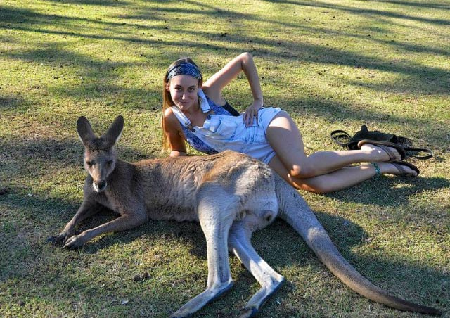 Attempting to spoon a kangaroo in Queensland, Australia