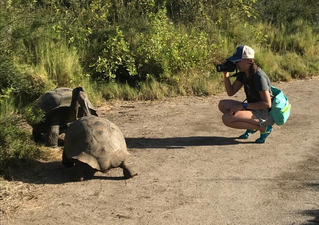 Photographing the two Galapagos tortoises at Urbina Bay