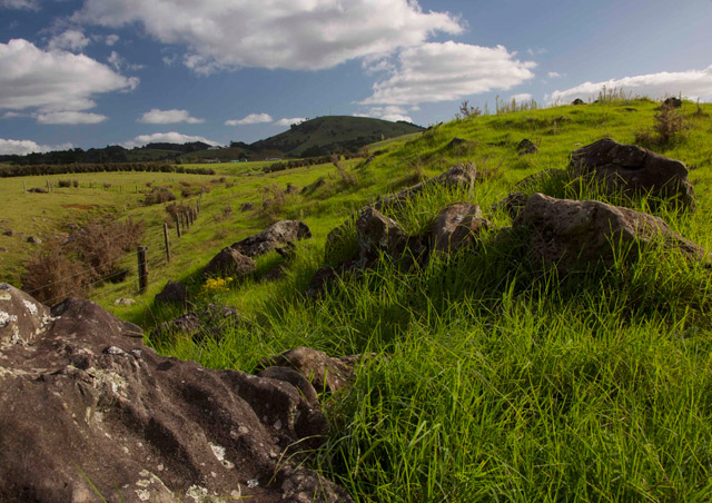 I was amazed at how lush the grass is in the rolling plains near the Bay of Islands in New Zealand.