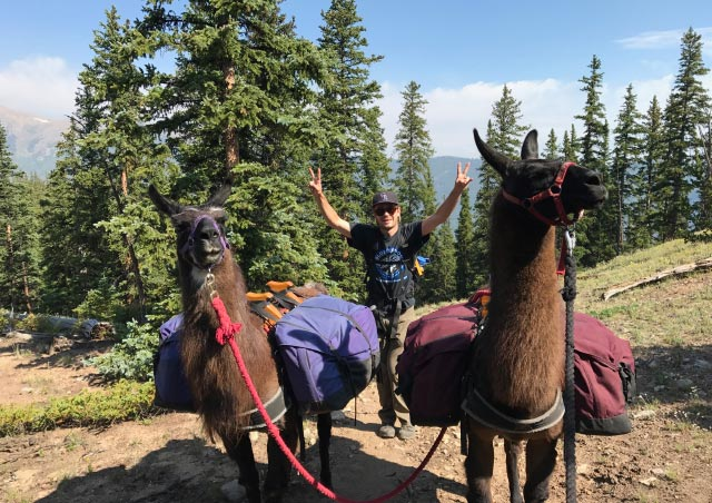 Hiking the Colorado Trail near Buena Vista, Colorado with my mother and some lovely llama companions: Frisco and Fuego.