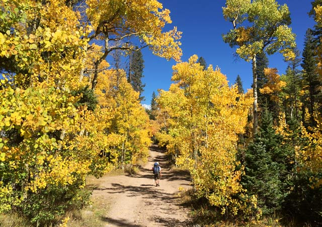 Enjoying a beautiful fall hike surrounded by the glowing Aspens into the Sangre de Cristo mountains before hiking one of Colorado's 14,000 ft mountains.
