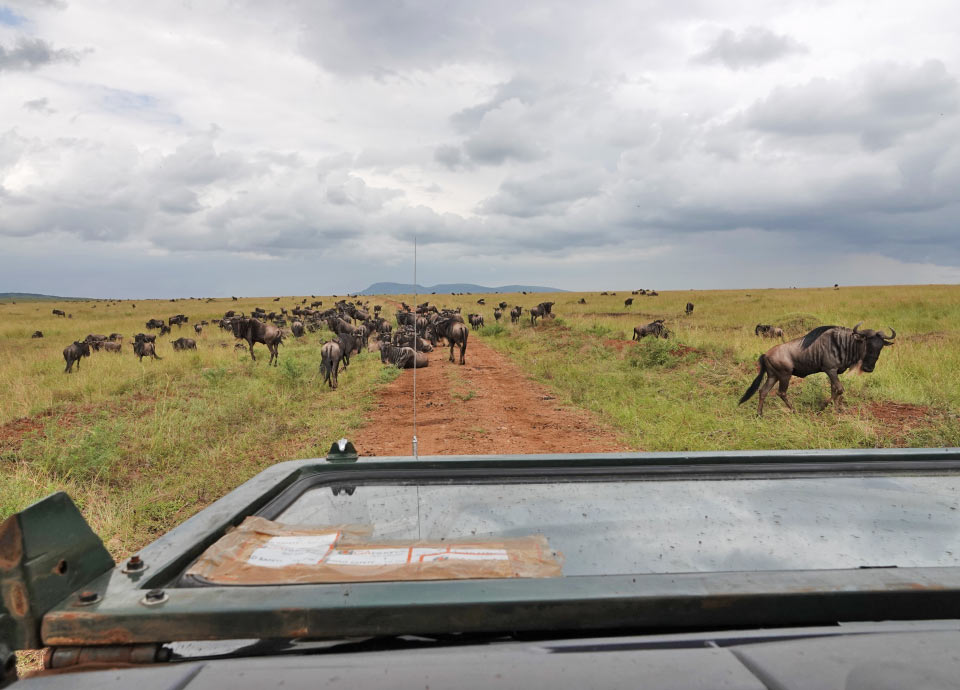 Traffic jam during the Great Migration in Kenya.