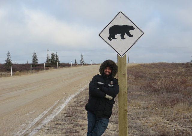 Classic Polar Bear Adventure: Caution – polar bear crossing!