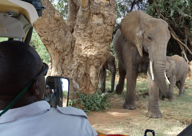 Kenya Site Inspection: Up close and personal with the elephants of Samburu.