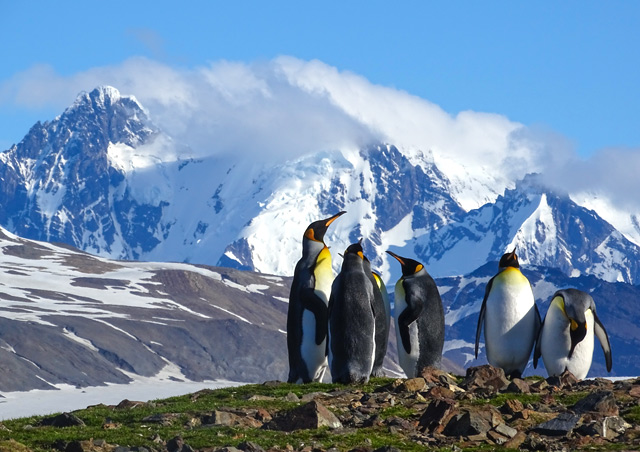 Green grass, king penguins, and cloud-scraping snow-capped peaks. South Georgia Island truly is an extraordinary destination.