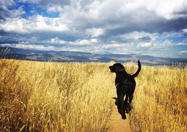 Hershel and his four-legged office buddies are fortunate to have a great place to walk during the work day.