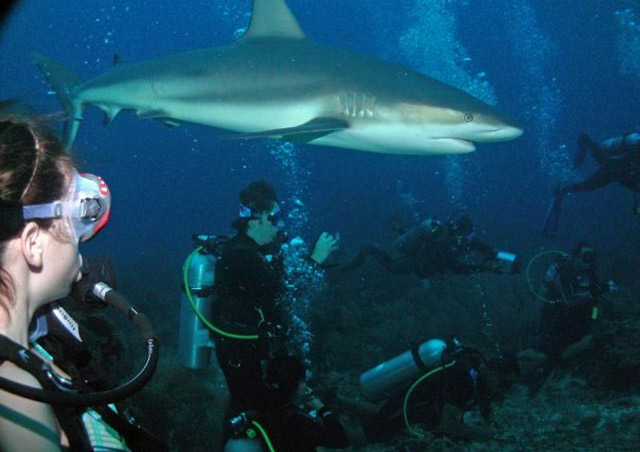 Here I am (left) cautiously watching as a black tip reef shark swims above my head in Roatan, Honduras.