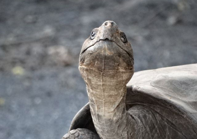 Such a sweet face! – Nat Hab's Lodge-Based Galapagos Trip.