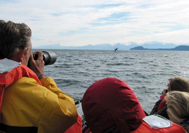 Frederick Sound, Alaska is one of the best place to see Humpback Whales! - Nat Hab's Alaska's Inside Passage Wildlife Explorer