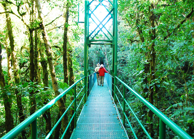 Exploring Costa Rica's cloud forests from hanging bridges, high in the canopy.