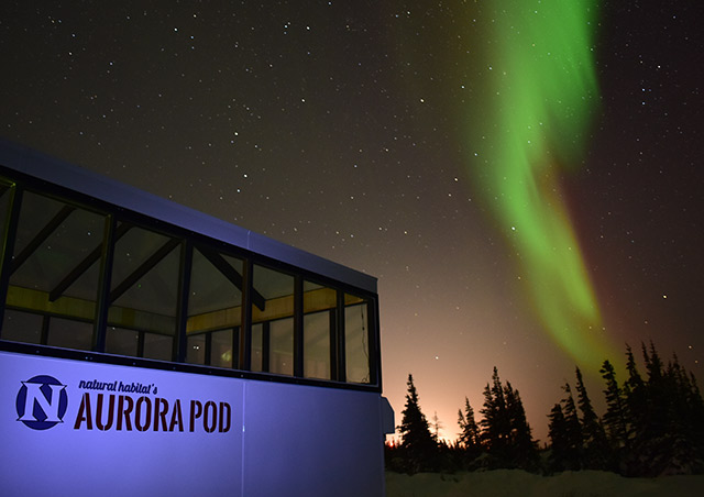 Experiencing Nat Hab's Aurora Pod, a heated, glass-enclosed viewing station on the tundra. The northern lights...the Nat Hab way!