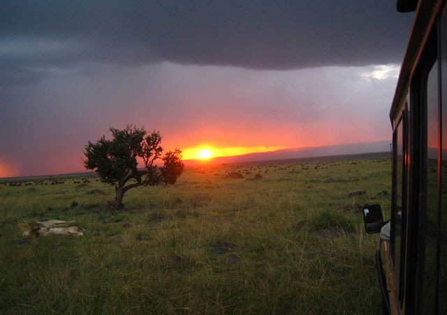 By far one of the most picturesque scenes of the Maasai Mara – a sunset on lions lazing in front of the migration.
