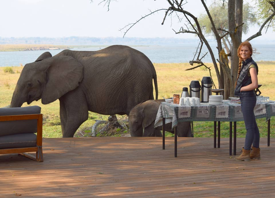 This momma & baby elephant stopped in for tea time at our camp on the Zambezi River in Zimbabwe.