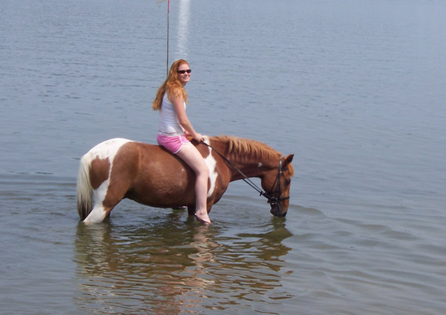 My favorite thing to do when I am home on the Chesapeake Bay is to take the ponies swimming!